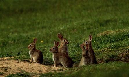 Young rabbits.