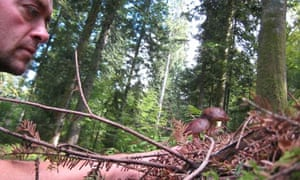 Phil Daoust mushroom picking