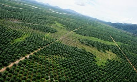 Forest cleared in West Kalimantan