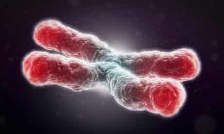a telomere