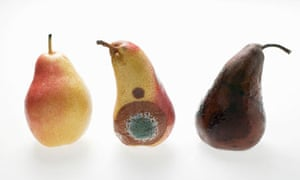 Three pears: fresh, mouldy and rotten