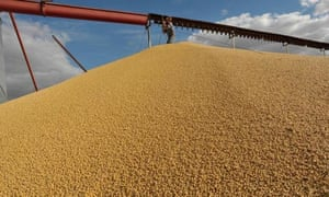 A worker repairs a grain lifter atop a soy bean mountain in a silo storage in Salto, Argentina