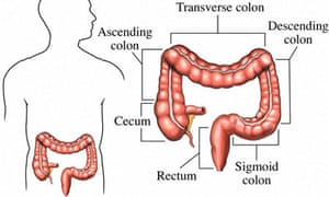 Colon Diagram | Mapping The Body The Sigmoid Colon Life And Style The Guardian