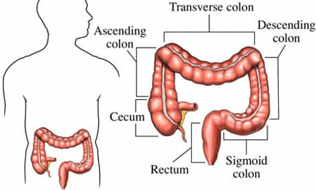 Mapping The Body The Sigmoid Colon Life And Style The Guardian