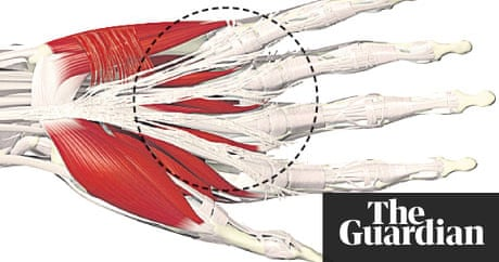 Mapping The Body Fascia Life And Style The Guardian