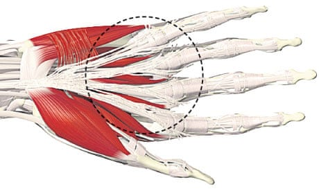 Mapping the body: fascia | Life and style | The Guardian