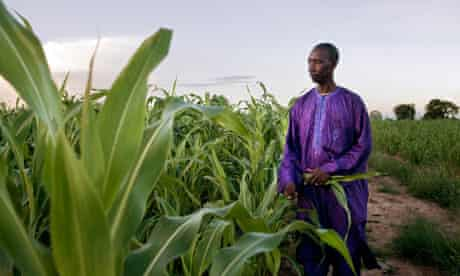 Souaibou Touré, leader of the cereal producers' co-operative in Cinzana, Mali
