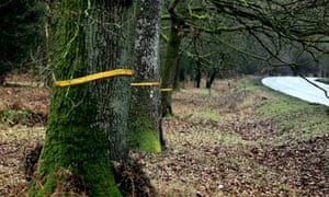 Protest ribbons are tied around trees in the Forest of Dean