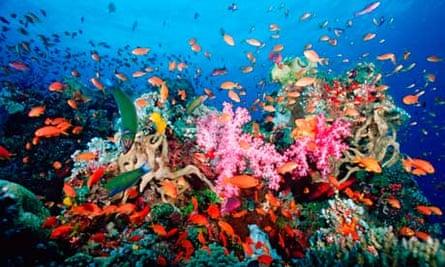 Coral reef near Fiji