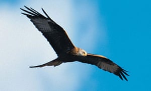 0430 ENVIRONMENT Kites
