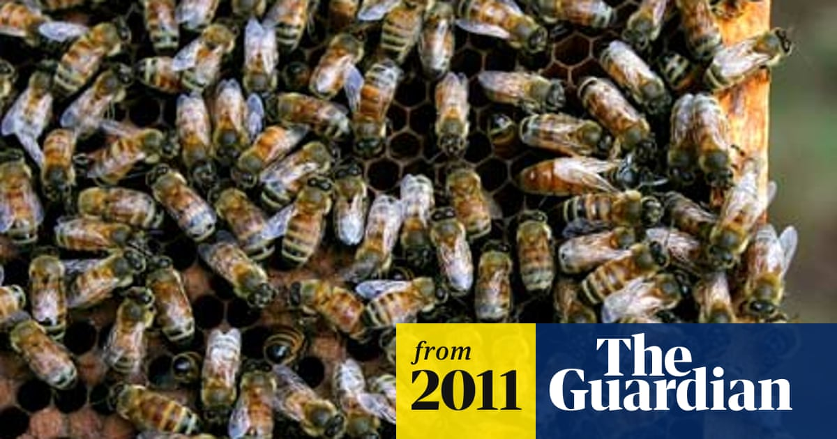 Globalisation and agriculture industry exacerbating bee decline