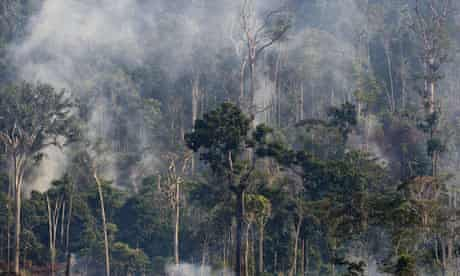 A burning sector of the Amazon forest, in the state of Para, Brazil