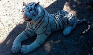 Toy-white-tiger-sparks-police-alert