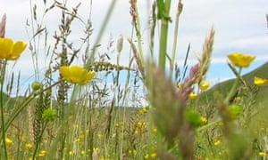 A rare ancient hay meadow in full bloom at Barrowburn Farm, Northumberland