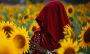 India-worst-place-women-sunflower