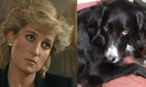 Diana dog