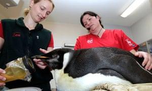lost emperor penguin happy feet