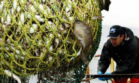 Cod and haddock caught between Norway and the Shetland Islands in the North Sea
