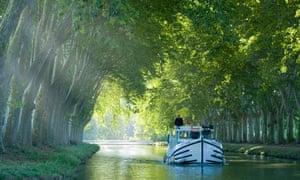 Plane trees, France