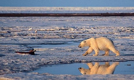 Monnett's findings into the threat to polar bears is under review.