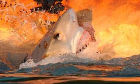 Shark attacks are rare