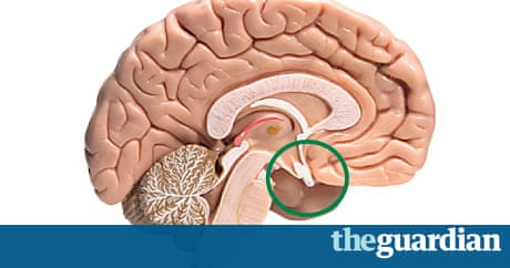 mapping the body: pituitary gland | life and style | the guardian, Cephalic Vein