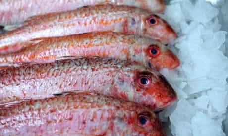 Red mullet on sale in a fishmongers