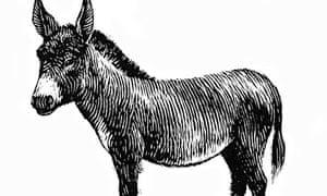 Donkey / Mule