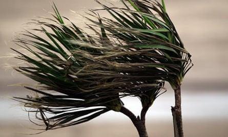 Trees blown in wind