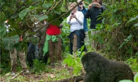 Virunga national park