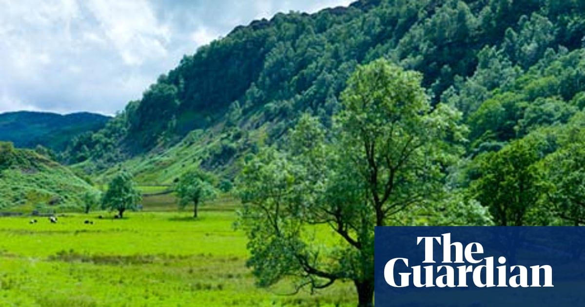 The ash tree crisis: a disaster in the making | Environment | The