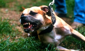 The proposed reforms mean that people attacked by dogs could receive nothing.