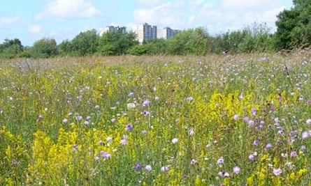 Meadows at Stockbridge Village, Liverpool