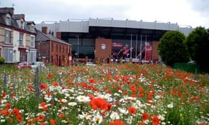 Wild flowers at Anfield, Liverpool