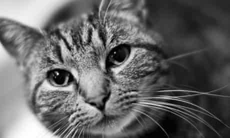 A cat photographed with a 50mm lens
