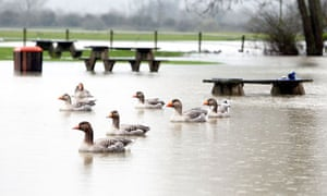 A flooded riverbank near Wolvercote, Oxfordshire, where the Thames burst it banks.