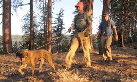 Cajun the hound, Dan Tichenor and Josh Brones in the woods of Yolla Bolly.