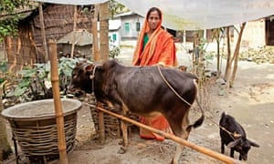 Bangladesh - Maleka Begum with her cow