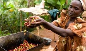 Fairtrade coffee farmer, Uganda