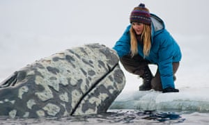 Drew Barrymore in a scene from Big Miracle, a film about the rescue of a family of gray whales