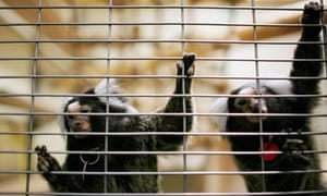 Monkeys at animal research centre