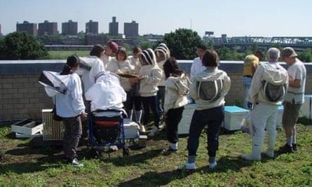 Beekeeping in New York