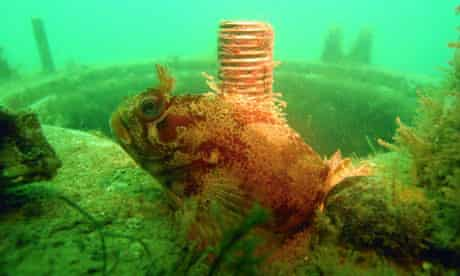 A fish swims in front of a wreck