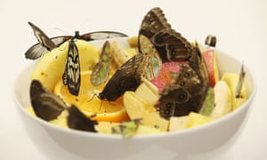 Butterflies feature as part of Damien Hirst's work In and Out of Love
