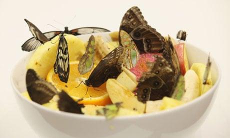 Damien Hirst's butterflies: distressing but weirdly
