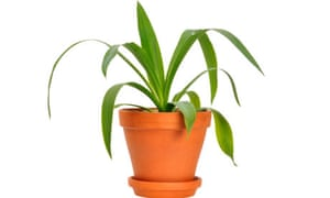 Does having pot plants in the office reduce stress?