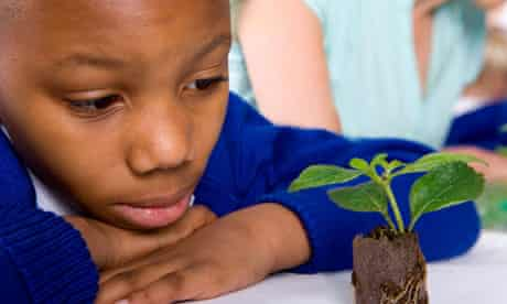 Serious school boy looking at plant seedling in classroom