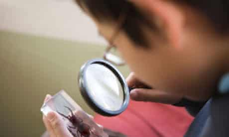 boy looking at rare beetle through magnifying glass
