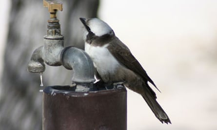 Bird perches on an outdoor water tap