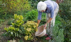 Housewife using bowl of washing up water to water garden plants
